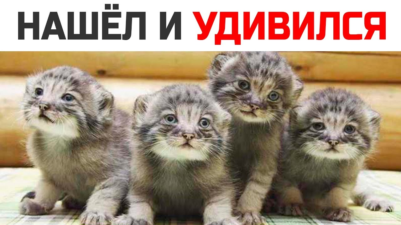 Фермер нашел у себя в сарае необычных котят, они выросли и превратились в невероятное