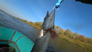 Рыбалка на Оке Щука Окунь Спиннинг с лодки