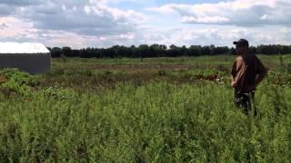 Вида питомника растений Alopovo.(Добрый день! Мы занимаемся выращиванием и продажей растений для ландшафтного дизайна. В ассортименте собст..., 2014-07-02T10:53:32.000Z)