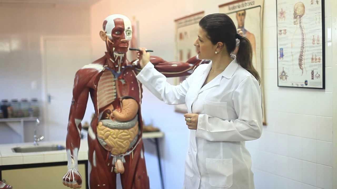 Artes - Anatomia e Fisiologia Humana - Letícia Gramázio - Unidade II ...