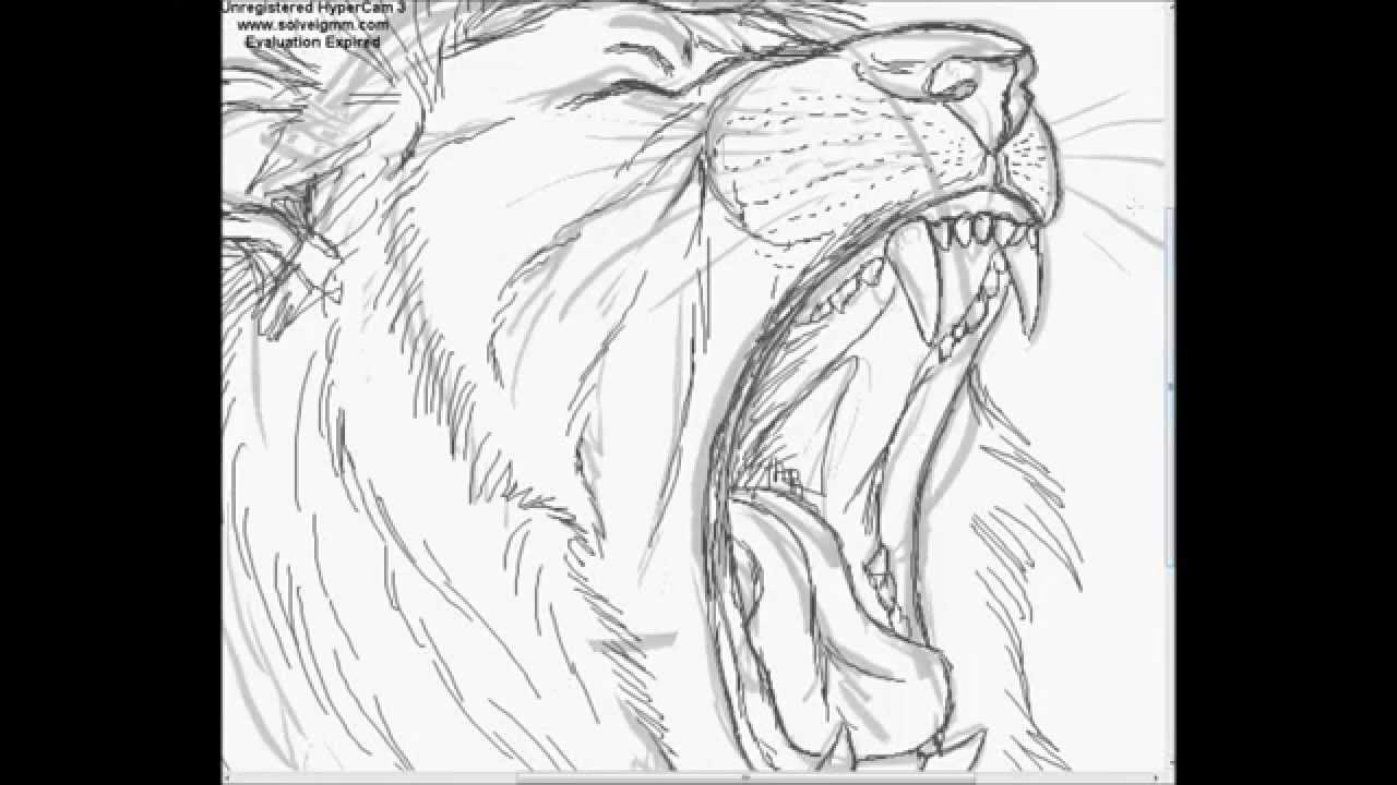Drawing A Lion Mumbai Growl Youtube