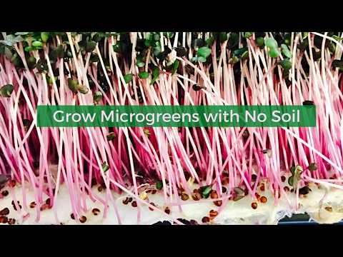 Grow Micro Greens with no soil. Create a Farming Business growing Micro Greens.  PolyRoot Grow Mat