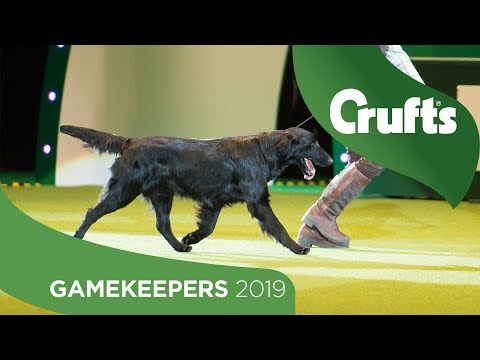 Gamekeepers Competition Final | Crufts 2019
