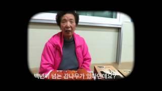 장성곶감판매,장성대봉곶…