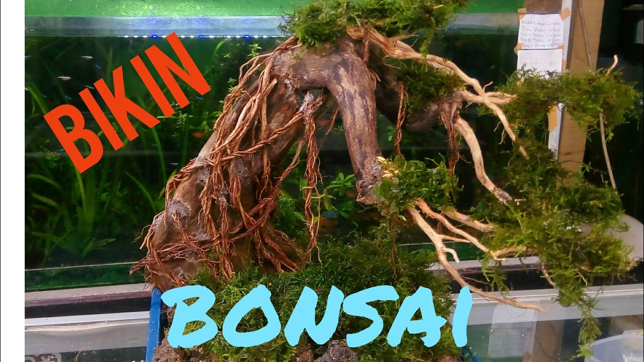 TUTORIAL MEMBUAT BONSAI AQUASCAPE - YouTube