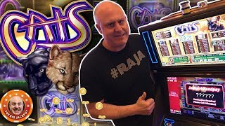 🐱MULTI-JACKPOT BLOWOUT! 🐱Cats Slot is on Fire! 🔥