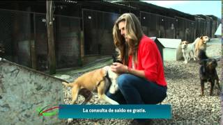 Montserrat en la Favela de Perros