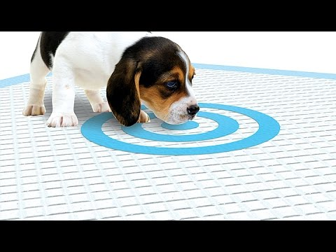 How To Keep Dogs From Peeing On The Floor