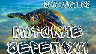 Морские черепахи — Sea turtles