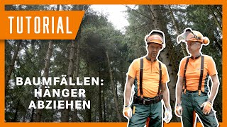 Baum fällen - Abziehen eines mittig hängengebliebenen Baumes