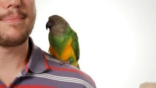 How To Potty Train Your Parrot | Parrot Training