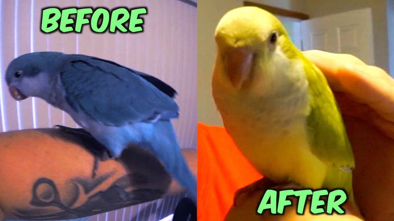 Color Changing Prank With Birds - YouTube