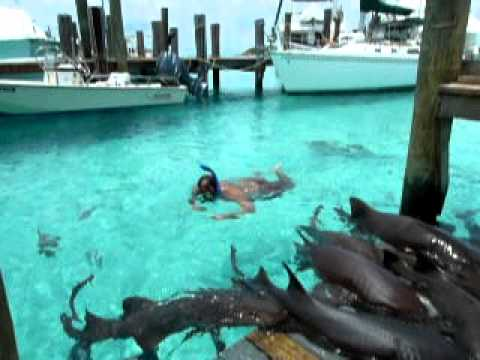 Swimming with Sharks on Compass Cay, Bahamas... Another Lowe Family Adventure