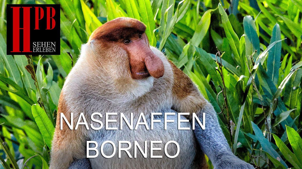 Nasen Affen