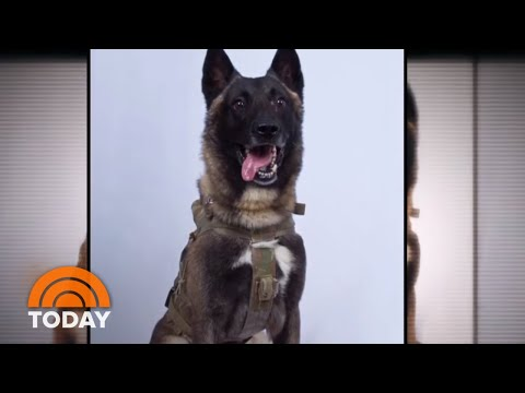 Hero Dog Injured In Al-Baghdadi Raid: Unnamed, But Not Unsung | TODAY