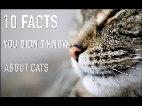 10 FACTS YOU DIDN'T KNOW ABOUT CATS