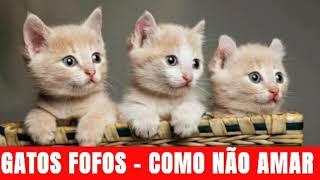 Gatos Fofos - São Uns Gatos Mais Fofos de que Outros/São muitos LINDOS