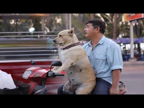 Funny Pictures Only In Vietnam 2016 - Top 10 Awesome