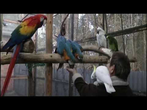 Papageien - Zu Laut, Zu Langlebig - Die Wegwerfvögel