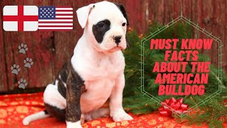 Getting To Know Your Dog's Breed: American Bulldog Edition