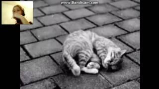 История про уродливого кота (Реакция)