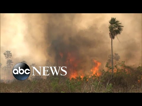 Brazil rejects G-7 money to fight Amazon wildfires l ABC News