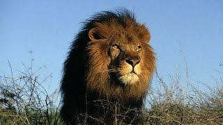 Королева львов 1 серия 1 сезон.