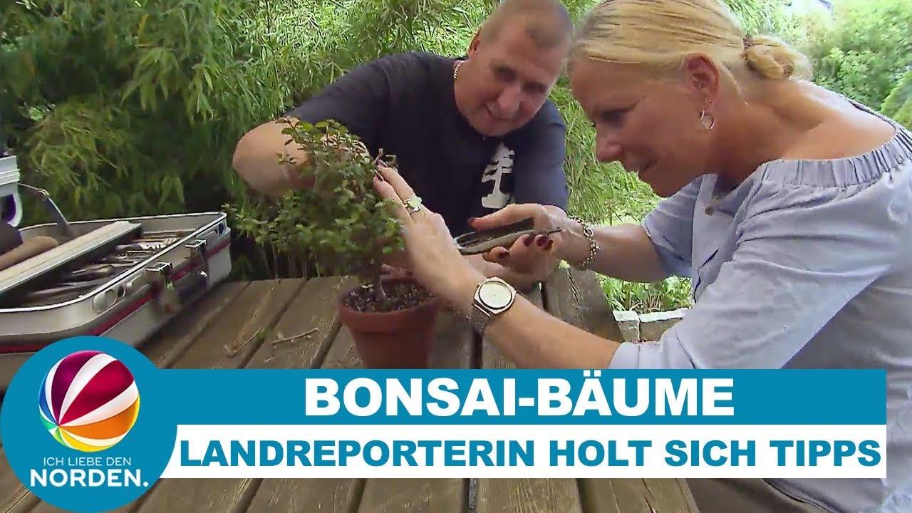 Bonsai paraziták - azonnalmobil.hu