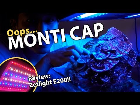 I BROKE MY MONTI CAP!!! Best Refugium Light of 2018? (Zetlight E200)