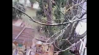 UDI last flight: stuck in a tree and then the rain beats down