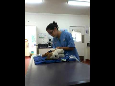 DVN 2016 CPR Dog