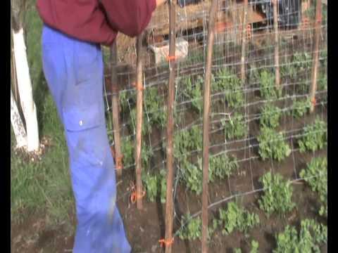 En la huerta gu as o tutores para que suban los - Tutores para tomates ...