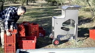 Effeuilleuse à Olives après récolte mecanique 100kg en 9 minutes-- www.oliveur.com--