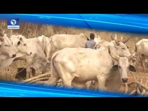 Dateline Abuja: Agric Minister On Making Agriculture Nigeria's Goldmine Pt 1