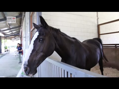 Riding High with Horseback Therapy