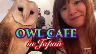 Hey guys!! I went to an owl cafe with one of my friends from my mus...
