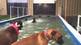 Pooch Palace Dog Daycare