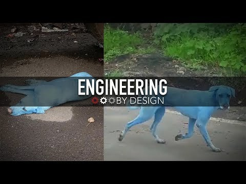 Engineering By Design: Blue Dogs
