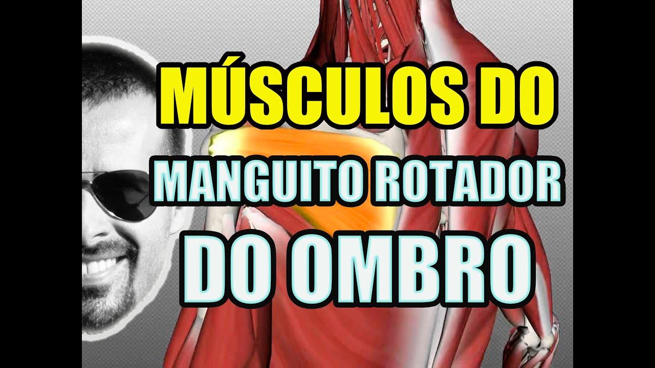 Increíble Rotador Tendones Del Manguito De La Anatomía Imágenes ...
