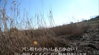 2016年1月10日、千葉鎌ケ谷鳥猟犬クラブオープントライアルに挑戦しまし...