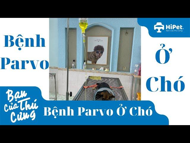 Bệnh Parvo ở Chó - HiPet