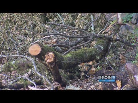 Rain increases risk of landslides in fire-affected Gorge
