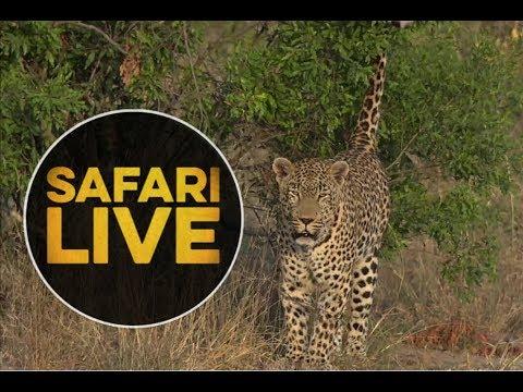 safariLIVE - Sunset Safari - May, 13. 2018