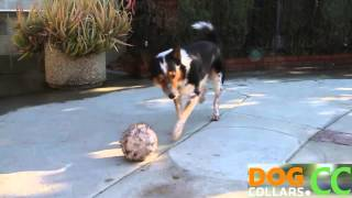 Nigahiga-amazing The Best Trained Obedient Dog Tricks [hd]