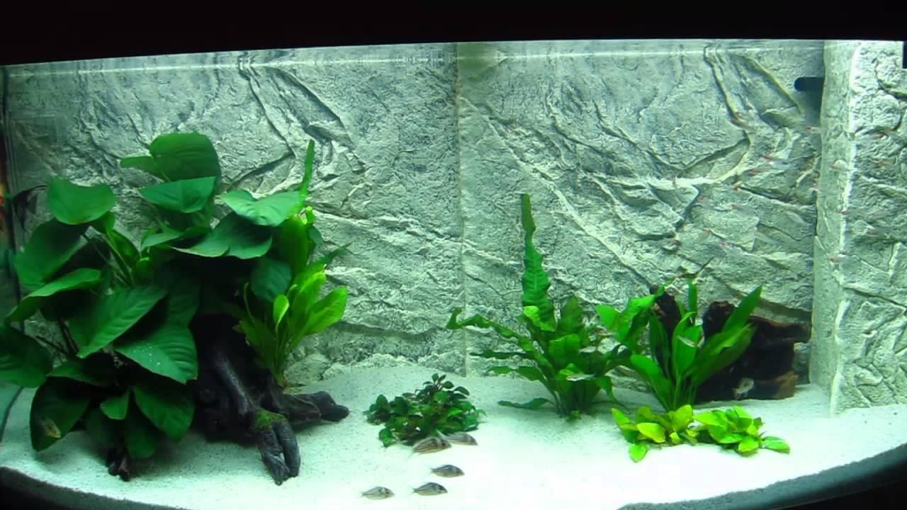 S damerika aquarium 2 wochen nach einrichtung februar for Aquarium einrichtung