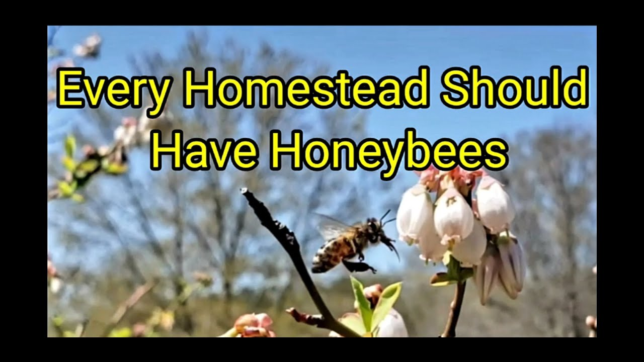 Every Homestead Should Have Honeybees