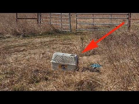2 байкера обнаружили в поле переноску для животных, заглянув внутрь, они потеряли дар речи