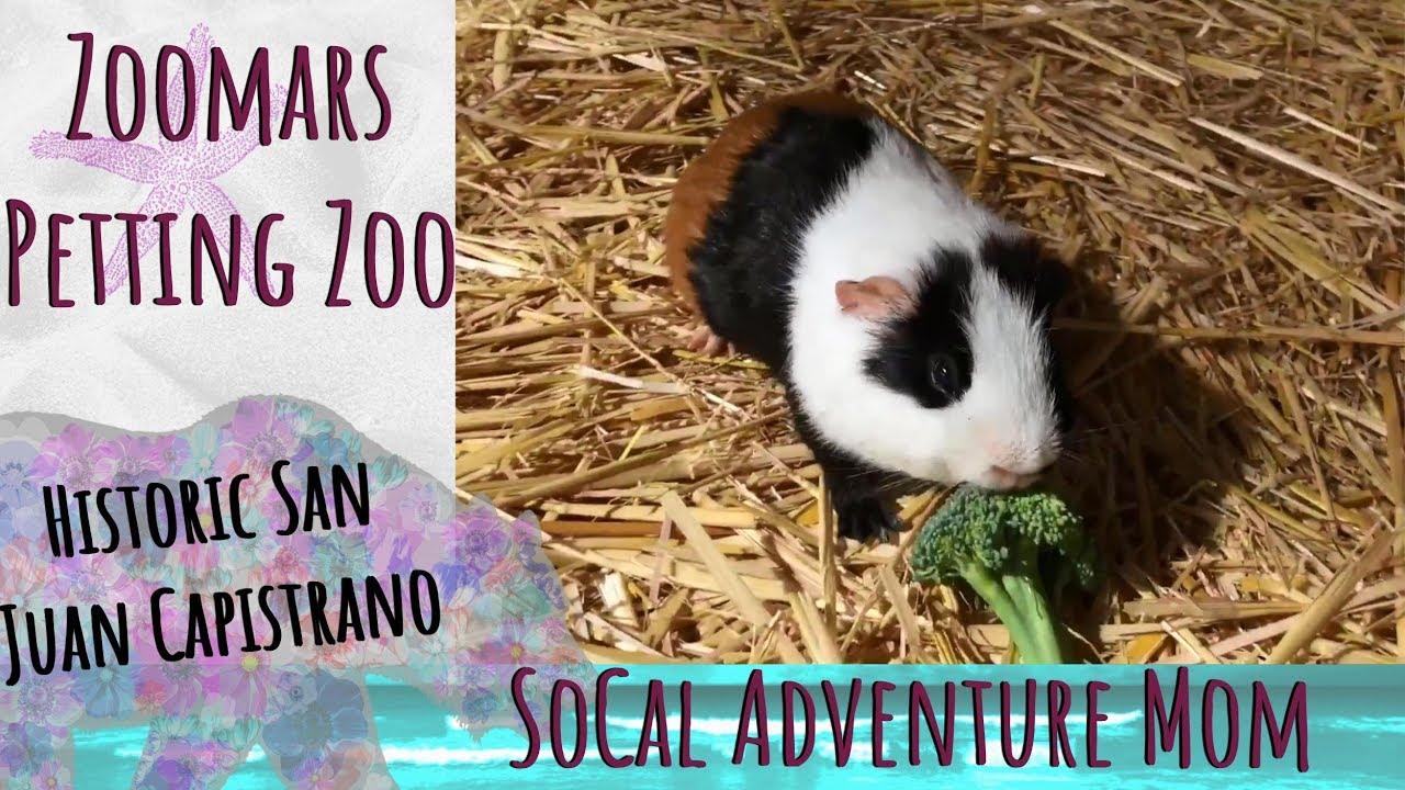 Zoomars Petting Zoo In Historic San Juan Capistrano Youtube