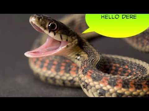 Draw A snake | MS PAINT  | How to draw a snake step by step |MS paint | pseb 2019 |cbse 2019
