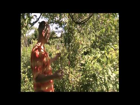 Чёрная малина Кумберленд, опровергаем МИФ